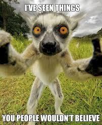 Lemur Meme - lemur meme imgur