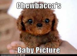 Cute Baby Animal Memes - 27 funny baby animals