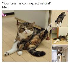 Funniest Animal Memes - 10 hilarious animal memes that will make your day so much better