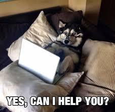 Yes This Is Dog Meme - wise dog meme