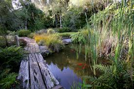 native plants of new zealand taranaki gardens of significance tourism new zealand media