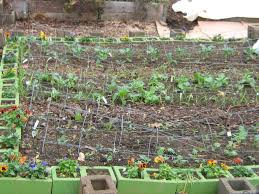 how to build a raised vegetable garden with cinder blocks home