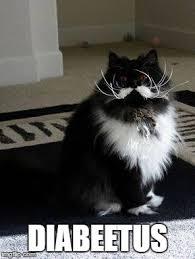 diabeetus cat imgflip