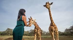 giraffe manor kenya natural world safaris
