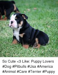 Pitbull Puppy Meme - so cute 3 like puppy lovers dog pitbulls usa america animal