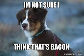 Dog Bacon Meme - im not sure i think that s bacon unsure dog make a meme