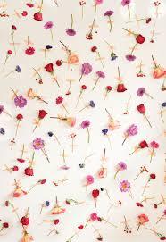 petal pushers wallpapers petal pushers photo backdrop backdrops flowers and photos