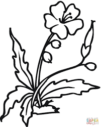 blooming hibiscus flower coloring page free printable coloring pages