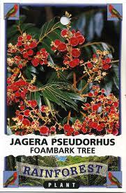 friends of peacehaven botanic park inc new members new plants 29 best natives images on pinterest australian native garden