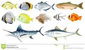 aquarium fish types names