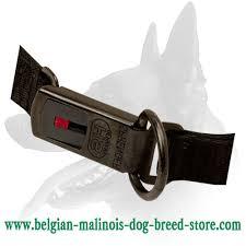 belgian shepherd how to train belgian malinois curogan neck tech dog collar with click lock