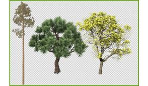 png trees collection 2d