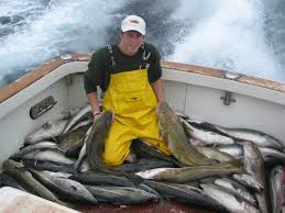 cod fishing charters gloucester ma haddock deep sea
