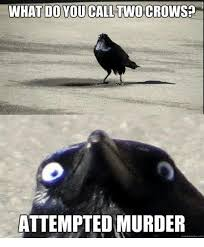 Attempted Murder Meme - 25 best memes about crows attempted murder crows attempted