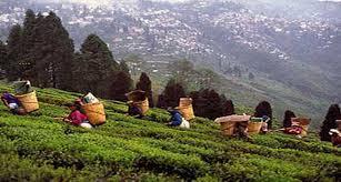Rock Garden Darjeeling by Viceroy Hotel Restaurant Hotels In Darjeeling Darjeeling Hotels