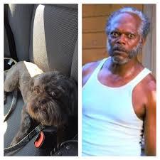 Samuel L Jackson Meme Generator - someone pointed out that my dog looks like samuel l jackson imgur