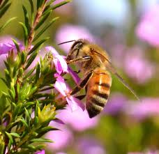 honey bee decorations for your home about city bee savers finding saving u0026 breeding local honey bees