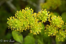 what florida native plant is blooming today daily photo of