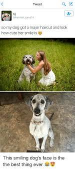 Funny Dog Face Meme - 25 best memes about dog face dog face memes