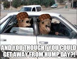 Hump Day Camel Meme - hump day camel imgflip