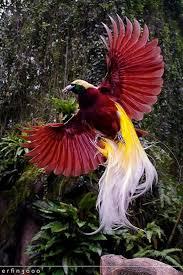 best 25 sounds of birds ideas on pinterest country life bird