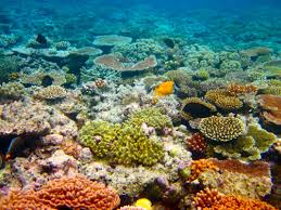 Coral Reefs Of The World Map by Great Barrier Reef New7wonders Of Nature