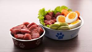 8 reasons to feed your dog raw food diet today