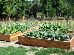 Raised Vegetable Garden Layout Best Vegetable Garden Layout Build Raised Bed Vegetable Garden