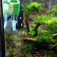 Aquascape Malaysia Kendalljenner Fun Fan Club Fissidens