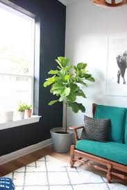 houseplants houseplants 101 how to keep houseplants alive and happy