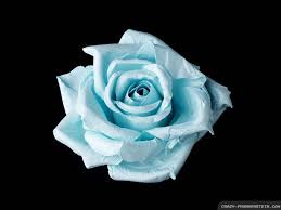 rose tattoos blue rose tattoo meaning