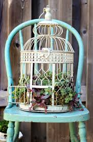 craftberry bush how to plant succulents in a birdcage container