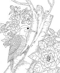 realistic animal coloring pages 49 best coloring pages images on pinterest coloring books