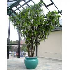 large artificial tree wisteria