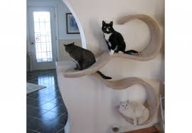 wall shelves ideas 8 cool and trendy ideas to build wall shelves for your cats feed