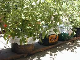global buckets grow bags