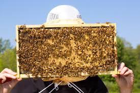 what u0027s the buzz umass amherst