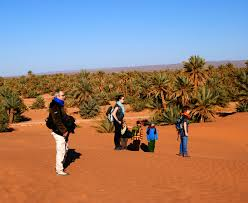 tours for families groups singles travellers