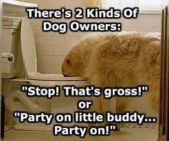 Dog Owner Meme - 10 hilarious memes every dog owner can relate to my wonderful