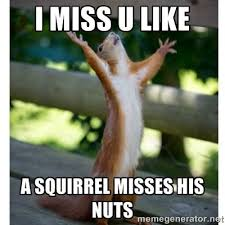 I Miss U Meme - squirrel memes i miss u like a squirrel misses picsmine