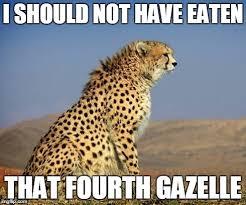 Cat Problems Meme - bigger cat problems meme guy