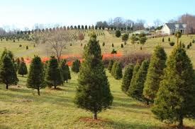 east tennessee commercial ornamental horticulture