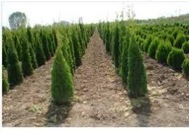 ada plant fidancilik eugardens
