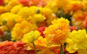 Nice Flowers 40 Beautiful Flower Wallpapers For Your Desktop