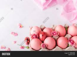 pink easter eggs pink easter eggs on light image photo bigstock