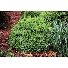 native plants southern california southern living plant collection shrubs trees u0026 bushes the