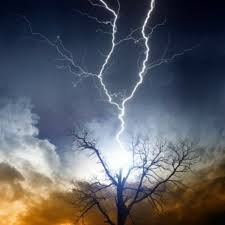 when lightning strikes your tree healing through rapid changes