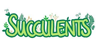 succulents by andrew gleeson maibbit