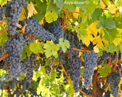 Napa Valley Home Decor Wine Fine Time Etsy