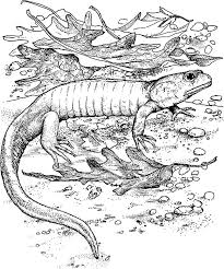 baby komodo dragon coloring pages download u0026 print